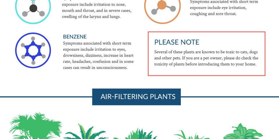 best air-filtering plants