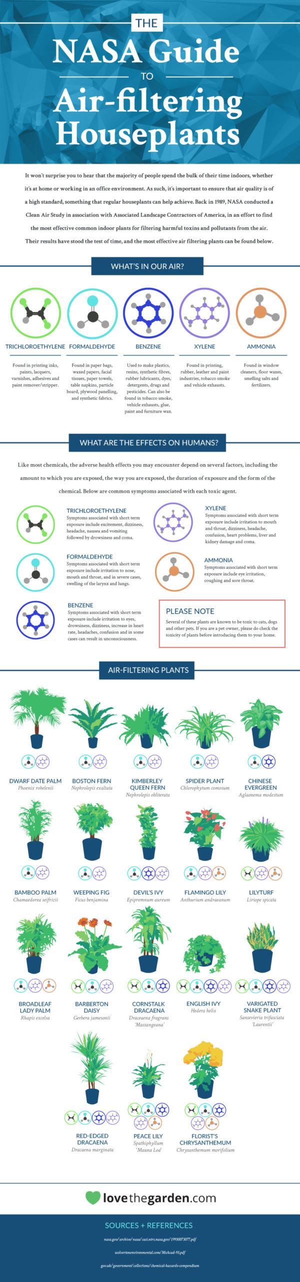 Best Air-Cleaning Plants, According to NASA